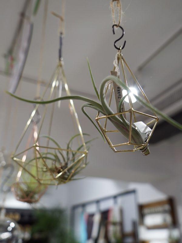 succulent&gift (11 - 15)