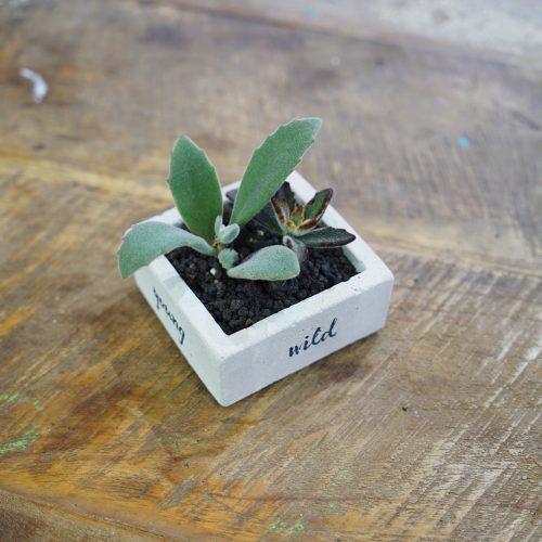 succulent&gift (12 - 15)
